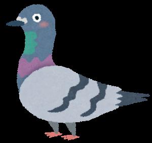 現場に巣食う、鳩